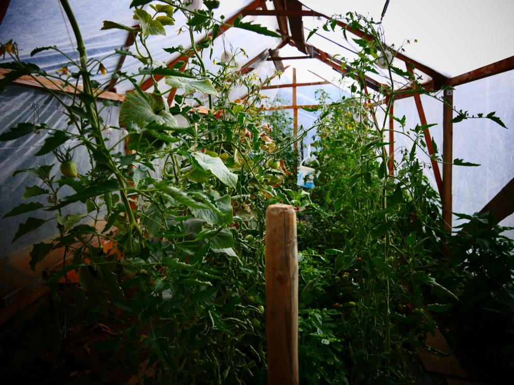 tomatenhaus-zuerich